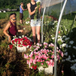 flower-harvesting-hoophouse-btf
